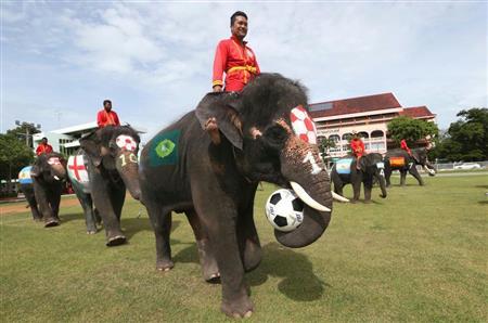 タイで学生とゾウのサッカー親善試合 - SankeiBiz(サンケイビズ)